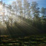 Maglovito jutro donosi sunčani dan